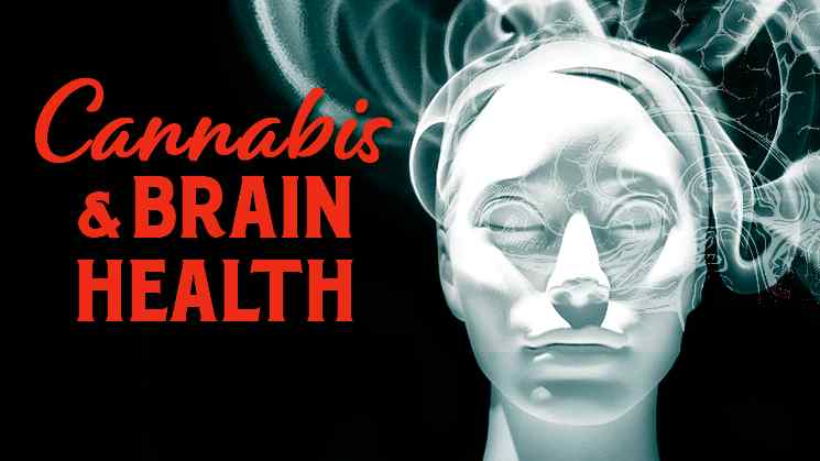 cannabis and brain health