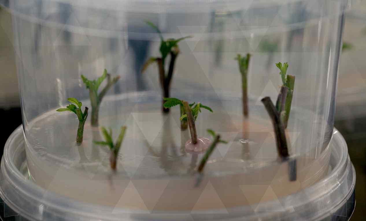 Watch: Benefits of Leaf Tissue Analysis
